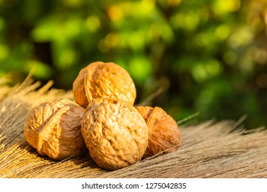 Wallnuts food on yellow grass green nature background as beautiful light