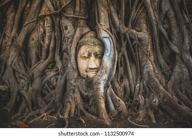 Wallpaper or background image of Buddha's head in tree roots at temple Ayutthaya in Thailand. Tourist attraction.  Historical landmark, worldwide well known.