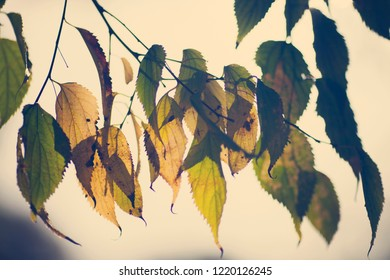 Wallpaper of beautiful autumn color leaves in the park