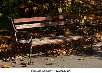 Wallpaper of beautiful bench in the park