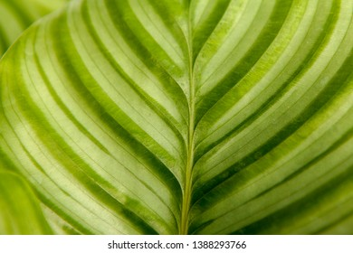 Wallpaper of green leaves with stripes in closeup