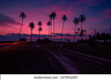 Wallpaper of natural light, close by the sea, with beautiful twilight sky, blurring of wind blowing all the time and many coconut trees and grasses surrounding