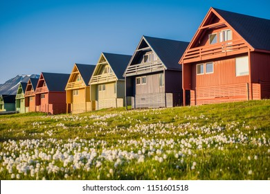 Wallpaper norway landscape nature of the mountains of Spitsbergen Longyearbyen Svalbard building city on a polar day with arctic summer in the sunset with flowers