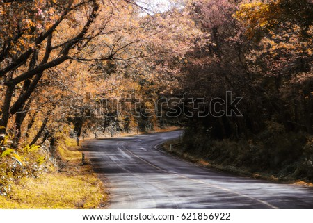 Wallpaper Sakura Road Thailand Doi Ang Stock Photo Edit Now