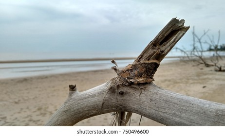 wallpaper wooden in beach