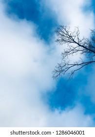 Wallpapper - tree - sky