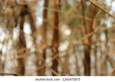 wallpapper wood bokeh