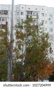 Walls of apartment buildings with windows. Summer and autumn background