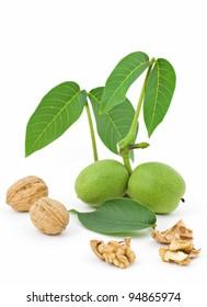 Walnut Branch