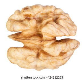 Walnut core isolated on white with clipping path