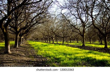 Walnut Orchard Background