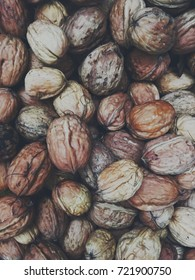 walnut season