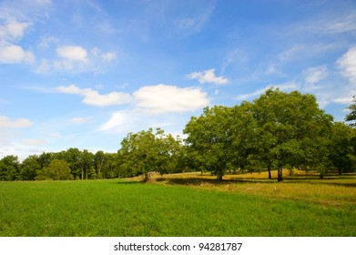 Walnut trees in French landscape in the Perigord