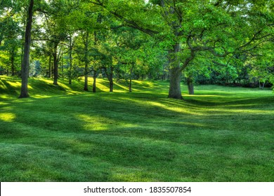Walnut trees in rolling parkland in London Ontario Canada