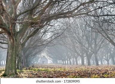 walnut wood in the fog