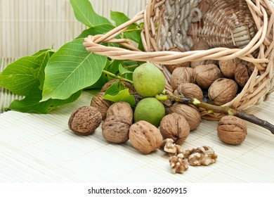 Walnuts with green leaves and immature fruit