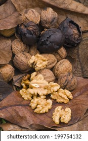 walnuts kernel (Juglans regia) with shell and husk, on a bed of leaves.