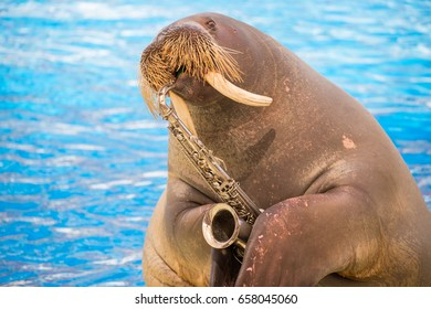 Walrus plaing on the trumpet