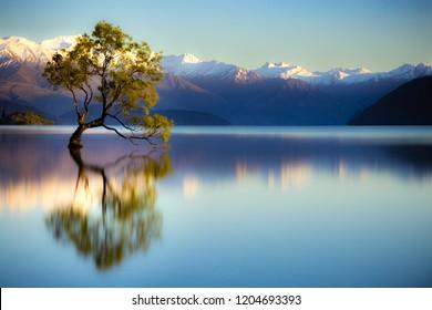 Wanaka Tree, Lake Wanaka, Wanaka, New Zealand