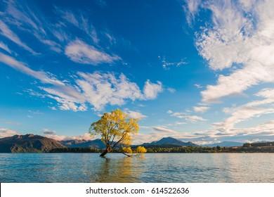 Wanaka Tree, Lake Wanaka at sunrise, New Zealand