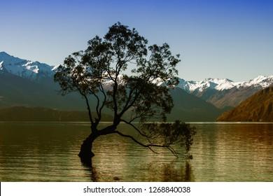 Wanaka Tree at Wanaka New Zealand
