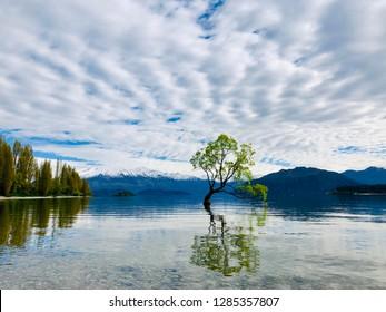 The Wanaka tree and its reflection on Lake Wanaka on a cloudy day
