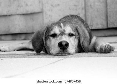 A wandering dog lying in the street.