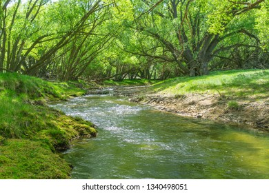 Wandering stream flowing through farmland between bright green leaves of arching  shady willow trees