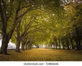 Wandsworth Park, London. Autumn colours trees and fallen leaves by the popular Thames path close to Putney and Wandsworth