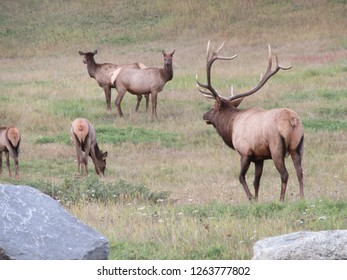 Wapiti Campground, Jasper, Alberta, Canada on 18.09.2018: Wapiti close to Wapiti Campground in Jasper