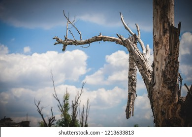 War actions aftermath, Ukraine and Donbass conflict, shelled tree with broken branches, former Airport area near city of Donetsk