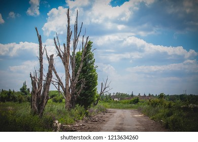 War actions aftermath, Ukraine and Donbass conflict, trees near country road damaged by shelling, former Airport area near city of Donetsk
