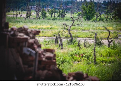 War actions aftermath, view from ruins on damaged trees, Ukraine and Donbass conflict, former Airport area near city of Donetsk