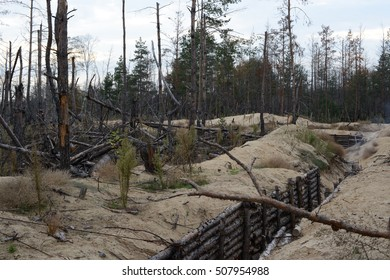 The war in Ukraine. Lugansk region, on October 7, 2016. Trees damaged by shelling from the weapon. The fortifications and trenches of the Ukrainian army