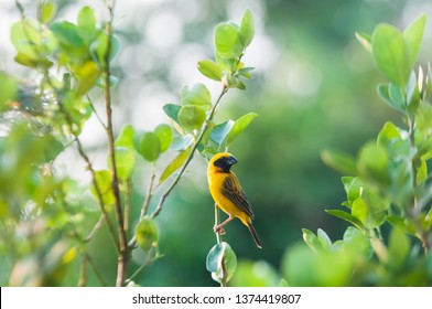 Warbler rests on beautiful branches.