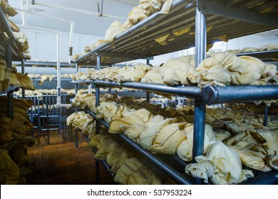 warehouse cheese, Russian dairy plant , import substitution, poor conditions