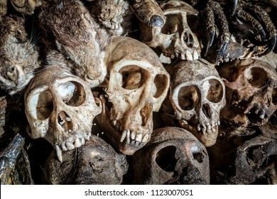 The warlock market, witchcraft and magic with skulls, the voodoo fetish in Togo, lomé, the capital of evil spirits. Ancient skulls.