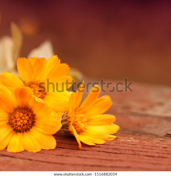 Warm abstract autumn background with marigold flowers, lying on a wooden base. Rural seasonal natural scene with a plant and bright orange hues.