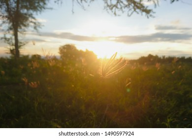 Warm autumn background with colorful bright meadow during the sunset. Silhouette of the grass in the light of the golden setting sun.
