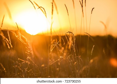 Warm autumn background with colorful bright meadow during the sunset. Silhouette of the grass in the light of the golden setting sun. Beautiful nature landscape with sunbeams.