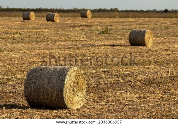 warm-autumn-evening-agricultural-field-6