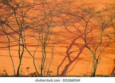 warm background with branches