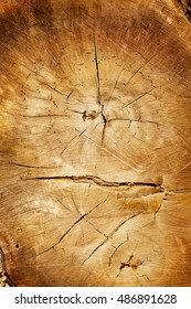 Warm brown wood texture with dark edges rings and cracks. Stump cut at the trunk.