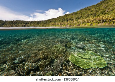 Warm, clear water covers a shallow coral reef growing next to Kri Island and the Dampier Strait in Raja Ampat, Indonesia.  This area is known for its high marine diversity and great scuba diving.