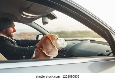 Warm dressed man enjoying the modern car driving with his beagle dog sitting on the co-driver passenger seat.