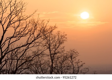 Warm evening sun above naked trees on a bright winter day in Karlsruhe, Germany