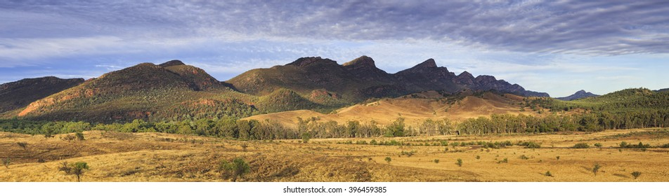 warm filling sun light lit plains and Wilpena Pounds of Flinders Ranges national park in South AUstralia. Wild life kangaroos feeding in outback between gumtrees.