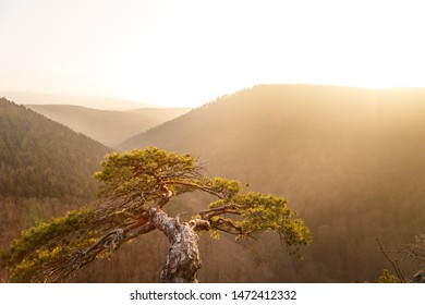 Warm light shines on a small tree with a view over the Ilsetal, nationalpark harz mountains