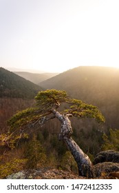 Warm light shines on a small tree with a view over the Ilsetal