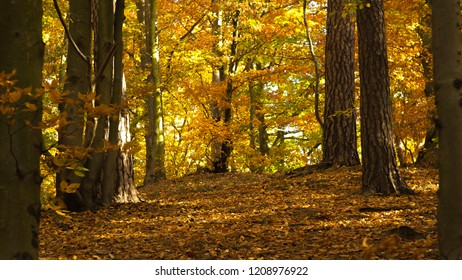 Warm, orange and yellow raw forest view in the middle of woodland in autumn, season fall.